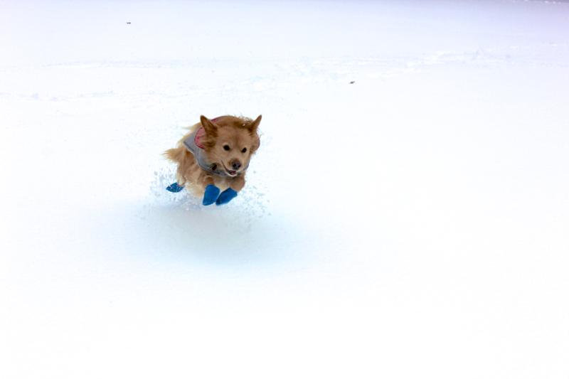 Stella's Snow Boots