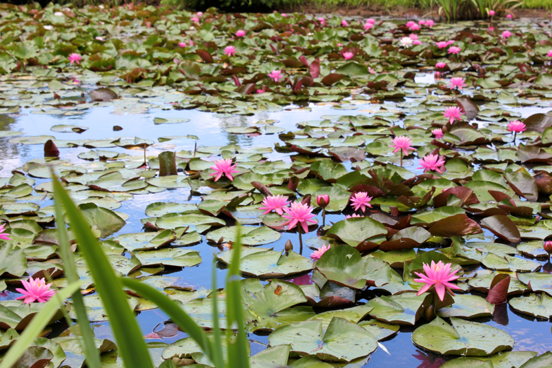 Aquatic Gardens